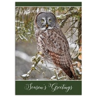 Great Gray Owl Card