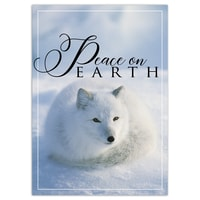 Arctic Fox Resting Card