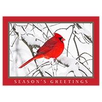 Snowy Cardinal Card