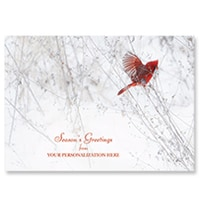Cardinal in Snow Card
