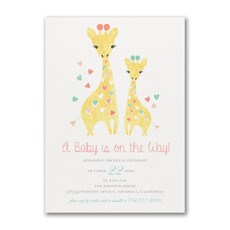 Baby Giraffe -