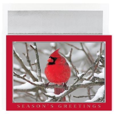 Snow Cardinal Holiday Collection Boxed Holiday Card