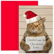 Bad Cat Holiday Collection Boxed Holiday Cards