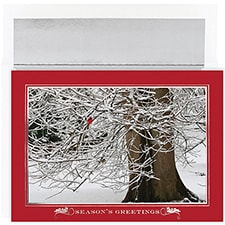 Winter Cardinal Century Boxed Holiday Card