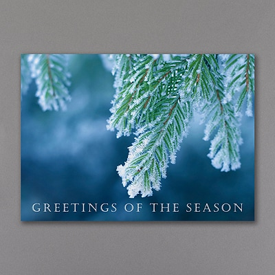 Iced Evergreens - Holiday Card