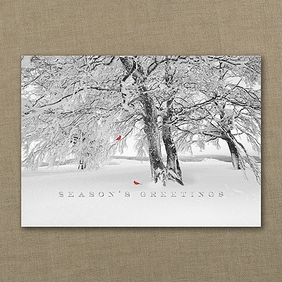 Cardinal Greetings - Holiday Card