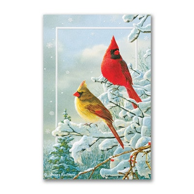 Winter Color - Holiday Card